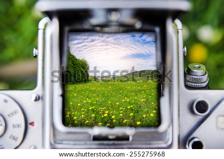 Taking a picture through the old camera on meadow with yellow dandelion flowers - stock photo