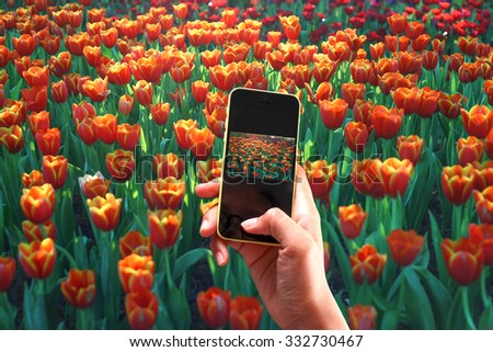 taking photo with mobile on hand to share social for beautiful flower in the garden