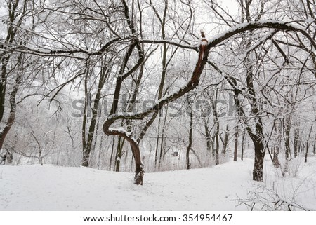 tales winter trees on snow in ukraine
