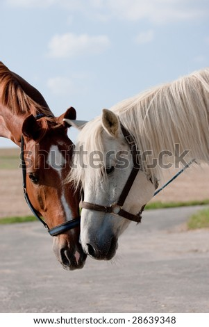 Talk of two horses in a field - stock photo