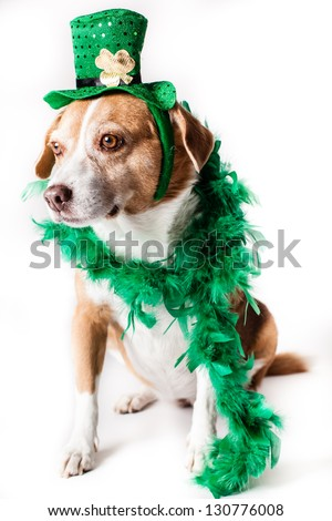 Talking St Patrick's day dog in a top hat with a shamrock