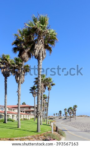 Tall coastal palms growing next to warm sands of Mandalay Beach in Oxnard, California