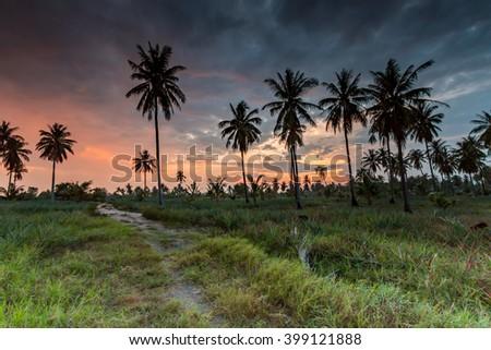 Tall coconut palm trees at twilight sky. - stock photo