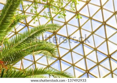 tall, colorful tropical fern plant inside a glass dome