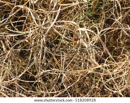 Tall, Dry Grass Intertwined in Harvested Field (From Above)