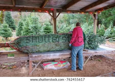 Christmas Tree Baler