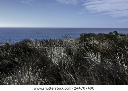 Tall Grass, Blue Sky, and Sea - stock photo
