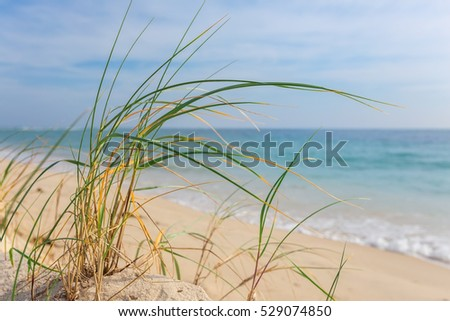 Tall grass on the shore of the sea.