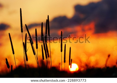Tall grass silhouette, Dramatic orange sunset, bokeh
