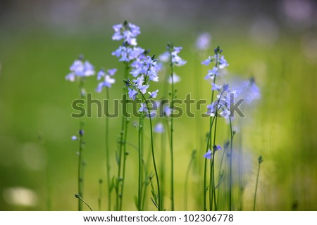 tiny purple flowers stock images, royaltyfree images  vectors, Beautiful flower