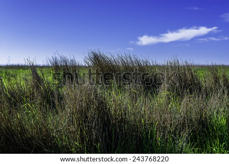 tall green grass background over blue sky - stock photo