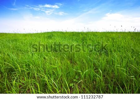 tall green grass field. Tall Green Grass Background Over Sky Field E
