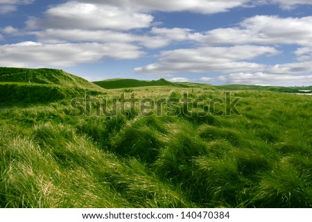 tall green grass on the dunes of Ballybunion golf course in county Kerry, Ireland - stock photo