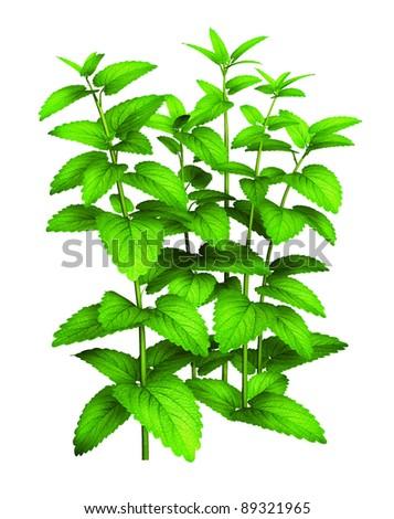 Tall green plant - stock photo