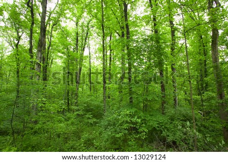 Tall Green Tree Forest