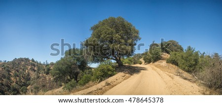 Tall green tree stands beside dirt trail in southern California wilderness.