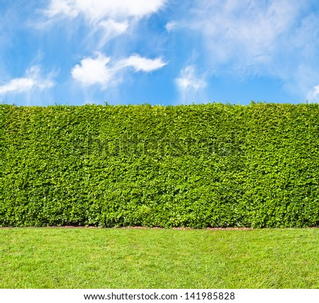 Tall hedge, endless seamless pattern, tall hedge with sky and grass - stock photo