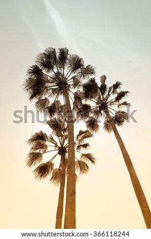 Tall palm trees - stock photo