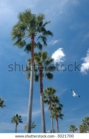 Tall palm trees and a sunny sky background