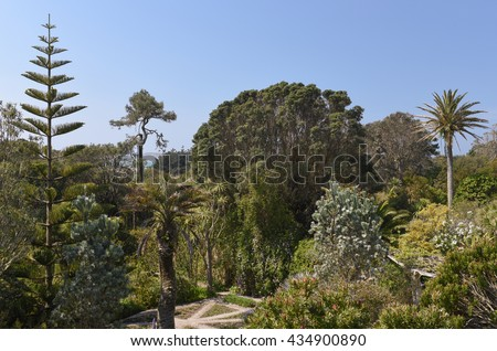 Tall Palm Trees in a Garden on the Island of Tresco in the Isles of Scilly, England, UK