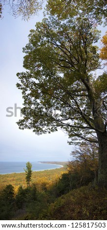 Tall tree overhanging autumnal forest background and lake