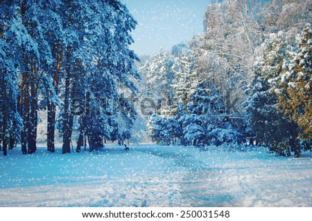 tall trees and a path in the park with falling snow, blue color - stock photo