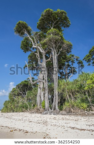 tall trees at sea beach