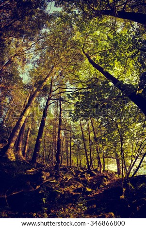 Tall trees deep in the forest with fisheye wide angle lens - stock photo