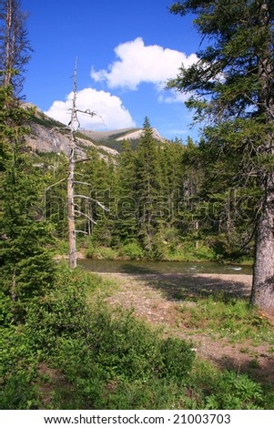 Tall trees in foreground, river, mountains and bright blue sky with white clouds; Waterton National Park, Alberta, Canada - stock photo