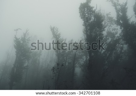 tall trees in stormy weather at forest edge - stock photo