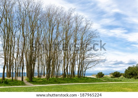 Tall trees on a sandy beach with grass and a path in the foreground, water in the background. Beautiful sky and clouds with copy space.