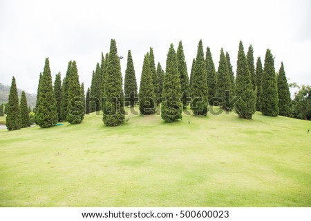 tall trees that grow on the lawn. In the area of the park