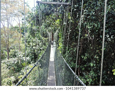 Taman Negara Malaysia - 03 10 2014 Treetop canopy walk through jungle & Canopy Walk Stock Images Royalty-Free Images u0026 Vectors | Shutterstock