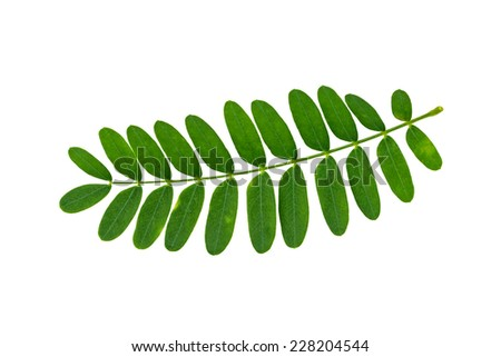 tamarind leaf decoction