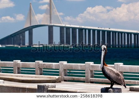 Tampa Bay - stock photo