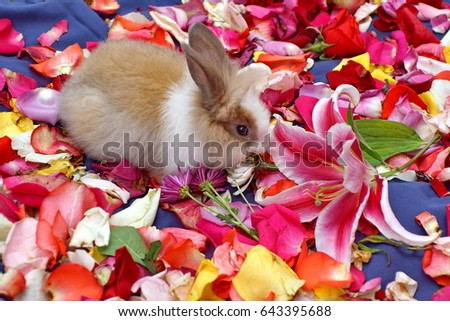 Tan and white bunny on a bed of rose petals, with a blue background