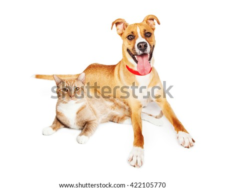 Tan color large mixed breed dog and cat laying together over white  - stock photo