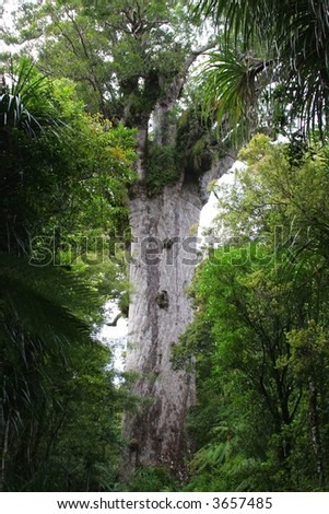 Tane Mahuta / Lord of the Forest - New Zealand Kauri Tree in Waipoa Forest North Island