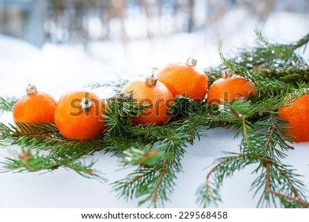 Tangerines as Fir-tree Toy on a Branch of Coniferous, White Snow, winter - stock photo