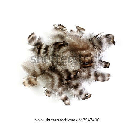 tangle of bird feathers on a white background - stock photo