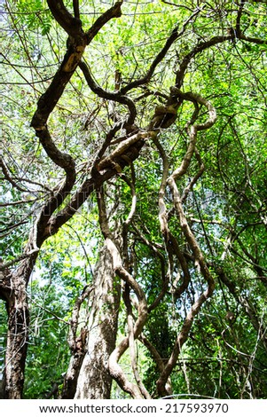 Tangle of lianas in the rainforest - stock photo