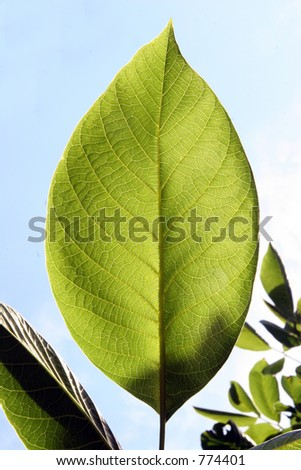 Taning leaf - stock photo