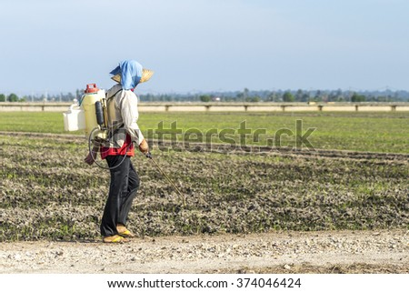 TANJUNG KARANG, MALAYSIA - 31 JANUARY 2016 : Unidentified farmer spraying insecticide with traditional way on a paddy field in Tanjung Karang, Malaysia. Selective focus and shallow DOF - stock photo