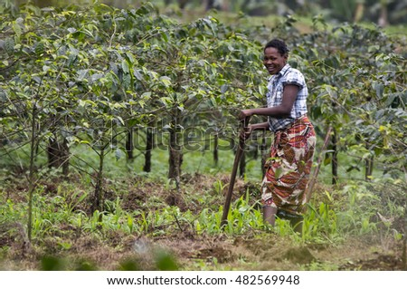 Tanzania, East-coast (28/07/2015) â?? Local woman working on the coffee- and banana- plantation fields, laughing into the camera.