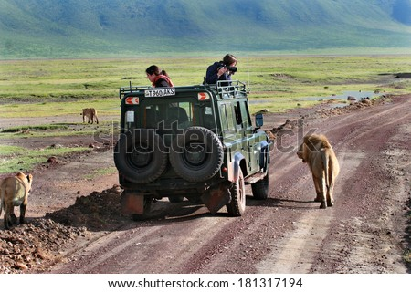 TANZANIA, NGORONGORO NATIONAL PARK  -  FEBRUARY 13, 2008: Tourists from utility vehicle, photographed wild lions in wildlife on jeep safari. Tourists photograph wild lions, looking out of hatch jeep. - stock photo