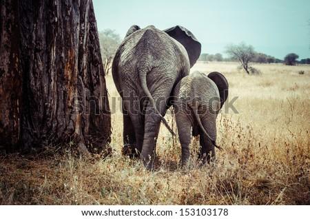 Tanzania, Tarangire National Park, Mother and baby elephant - stock photo