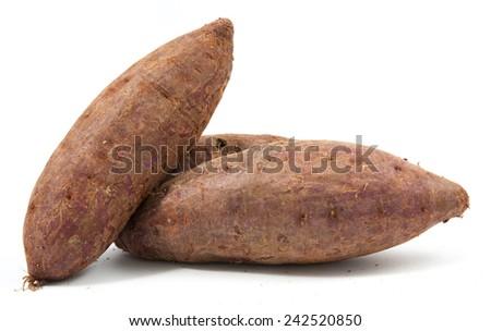 tapioca plants cassava closeup isolated on white background - stock photo