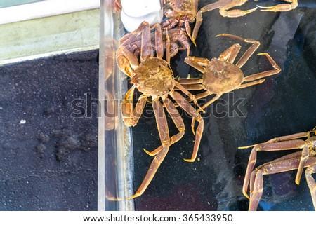 Taraba king crab in the Hakodate morning market - stock photo
