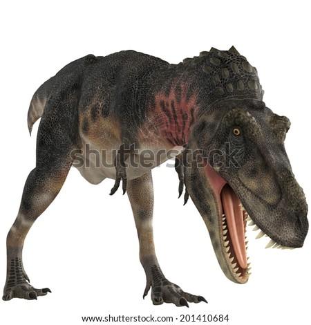 tarbosaurus eating pose - stock photo