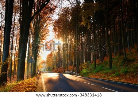 Tarmac road with the line across the colorful autumn forrest with the big trees - stock photo